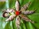 Cá mòi Hưng Yên